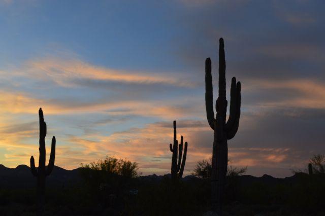 Desert scene at dusk