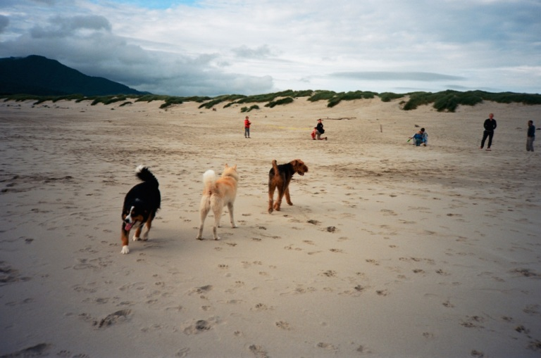 I tried repeatedly to get a dogs on beach picture with my cell phone.  Forget about it.  They had moved on before the picture shot.  This is not a great shot but at least I got all three dogs and froze their action.  This is the Olympus XA with Ektar.