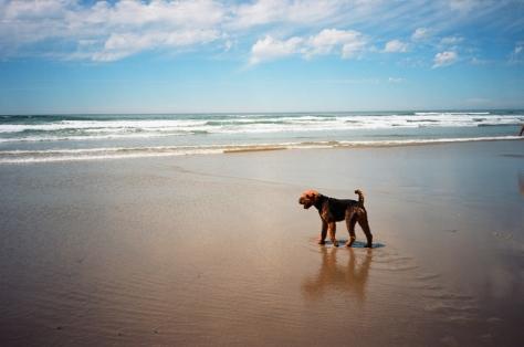 manzanita b + dog