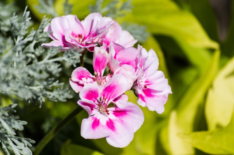 pink white flowers