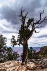 South rim trail-0645