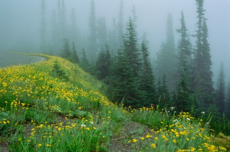 Foggy hill in Olympic National Park Velvia 50