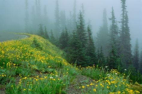 Foggy hill in Olympic National Park Velvia 50